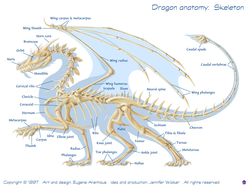 View Full Size | More how to draw dragons how to draw dragons | Source ...